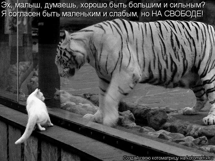 Котоматрица: Эх, малыш, думаешь, хорошо быть большим и сильным? Я согласен быть маленьким и слабым, но НА СВОБОДЕ!
