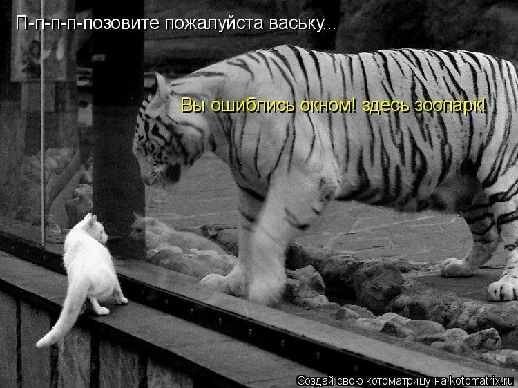 Котоматрица: П-п-п-п-позовите пожалуйста ваську... Вы ошиблись окном! здесь зоопарк!