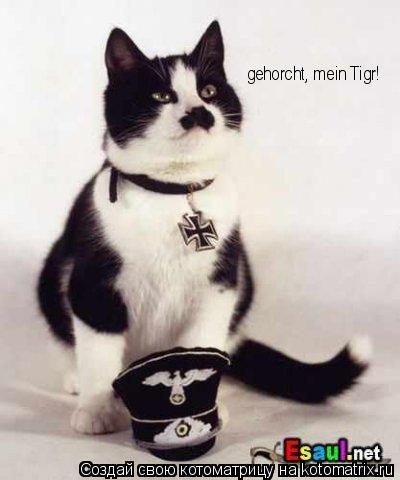 Котоматрица: gehorcht, mein Tigr!