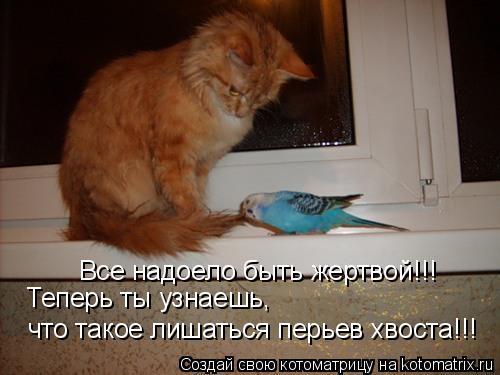 Котоматрица: Все надоело быть жертвой!!! Теперь ты узнаешь,  что такое лишаться перьев хвоста!!!