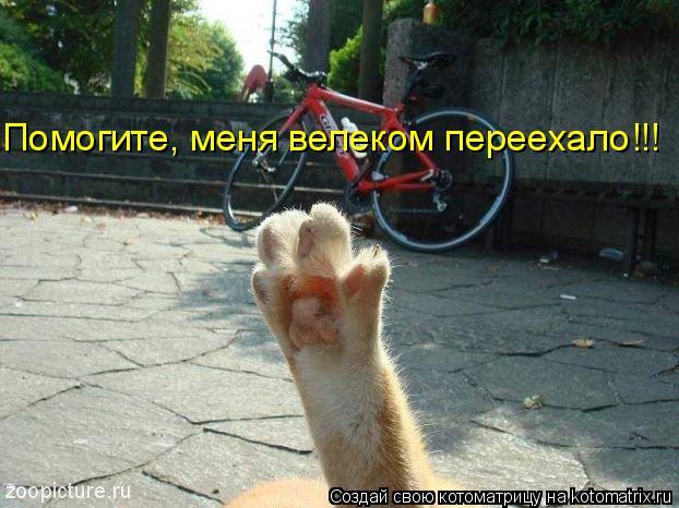 Котоматрица: Помогите, меня велеком переехало!!!