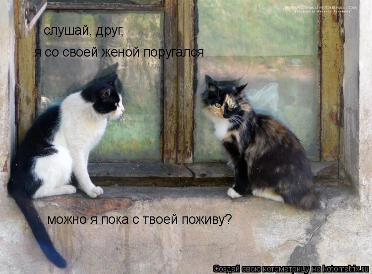 Котоматрица: слушай, друг,  я со своей женой поругался  можно я пока с твоей поживу?