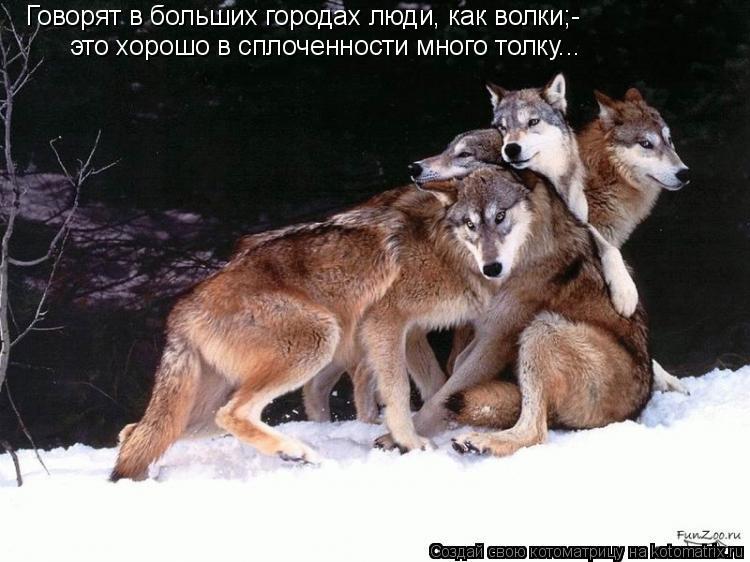 Котоматрица: Говорят в больших городах люди, как волки;- это хорошо в сплоченности много толку...