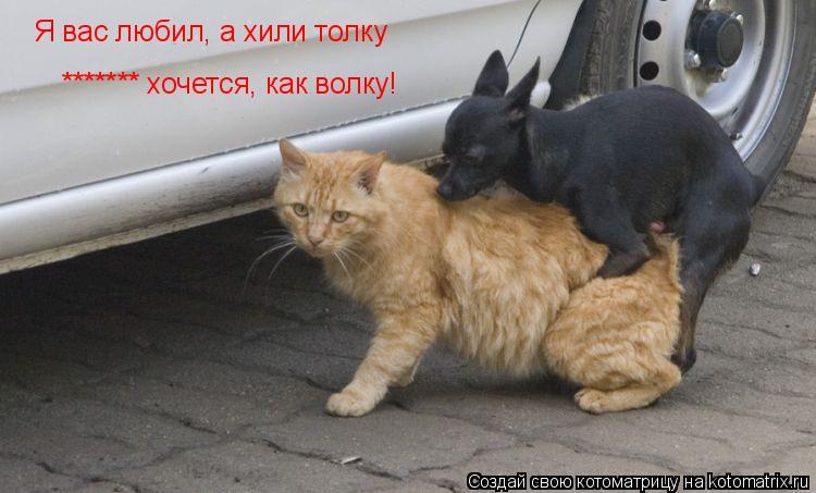 Котоматрица: Я вас любил, а хили толку ******* хочется, как волку!