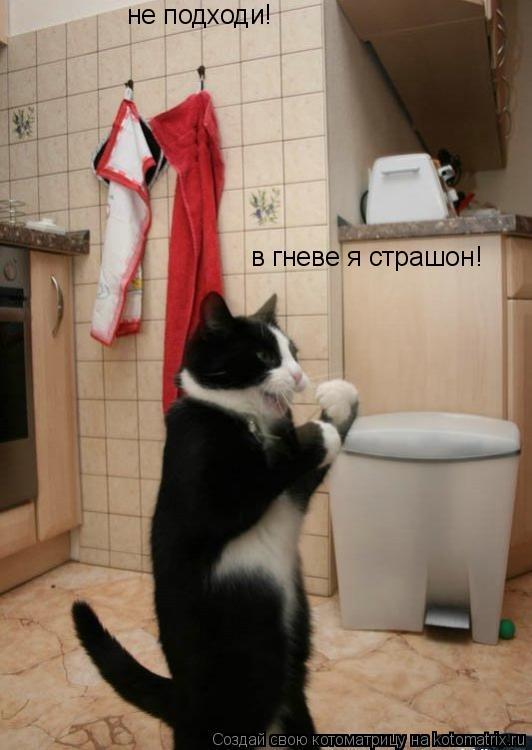 Котоматрица: не подходи! в гневе я страшон!