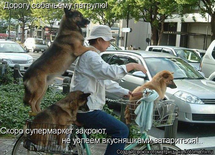 Котоматрица: Дорогу собачьему патрулю! Скоро супермаркет закроют,  не успеем вкусняшками затариться!..