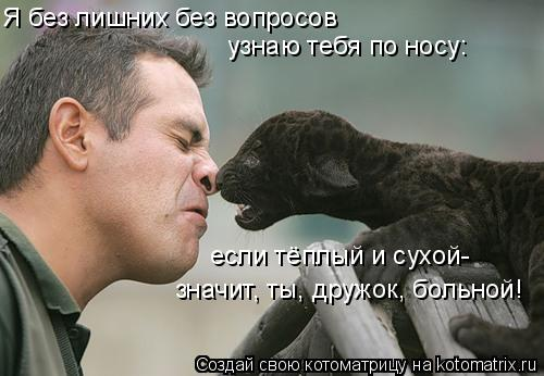 Котоматрица: Я без лишних без вопросов узнаю тебя по носу: если тёплый и сухой- значит, ты, дружок, больной!