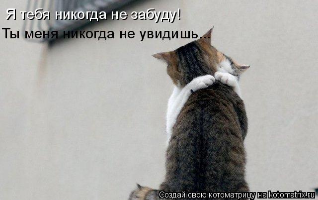 Котоматрица: Я тебя никогда не забуду! Ты меня никогда не увидишь...