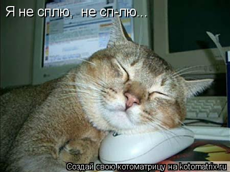 Котоматрица: Я не сплю,  не сп-лю...