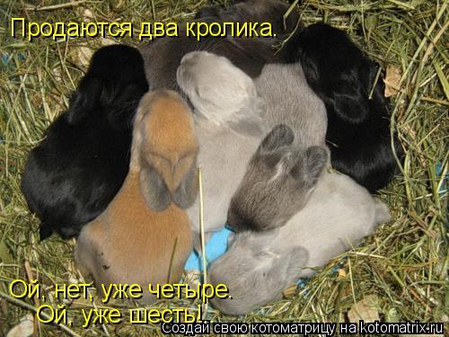 Котоматрица: Продаются два кролика. Ой, нет, уже четыре. Ой, уже шесть!..