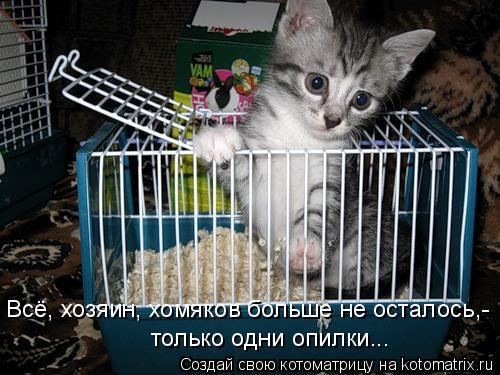 Котоматрица: Всё, хозяин, хомяков больше не осталось,- только одни опилки...