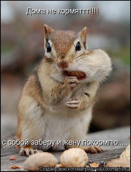 Котоматрица: Дома не кормяттт!!!! с собой заберу и жену покормлю.....