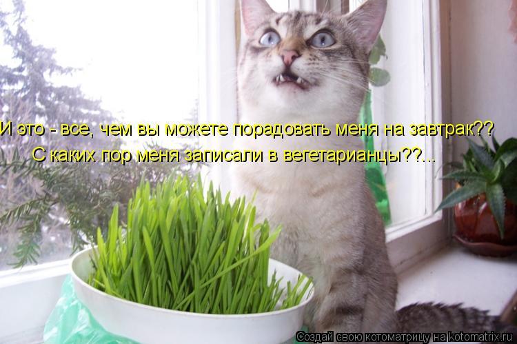 Котоматрица: И это - все, чем вы можете порадовать меня на завтрак?? С каких пор меня записали в вегетарианцы??...