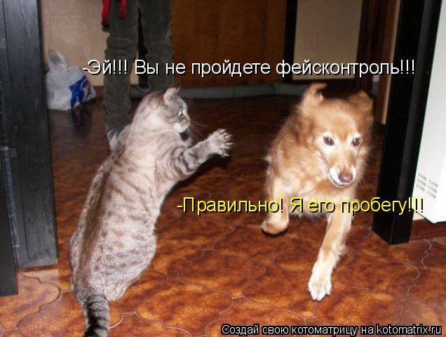 Котоматрица: -Эй!!! Вы не пройдете фейсконтроль!!! -Правильно! Я его пробегу!!!