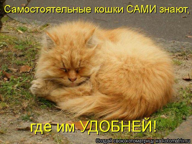 Котоматрица: где им УДОБНЕЙ! Самостоятельные кошки САМИ знают,