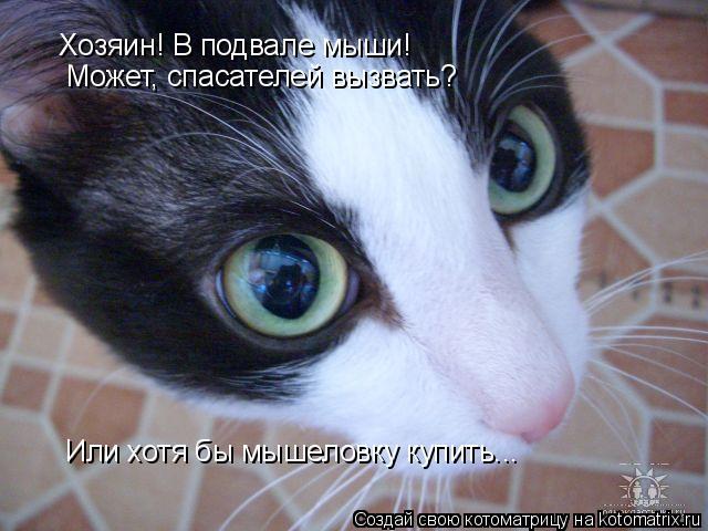 Котоматрица: Хозяин! В подвале мыши! Может, спасателей вызвать? Или хотя бы мышеловку купить...