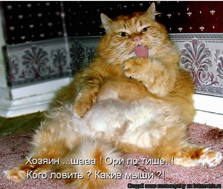Котоматрица: Хозяин ...шааа ! Ори по тише..! Кого ловить ? Какие мыши ?!