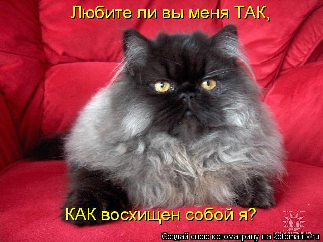 Котоматрица: Любите ли вы меня ТАК, КАК восхищен собой я?