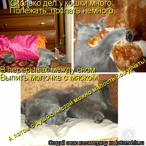 Котоматрица: Сколько дел у кошки много: Полежать, поспать немного, В перерывах между сном Выпить молочка с мяском... А потом с душою чистой можно малость п