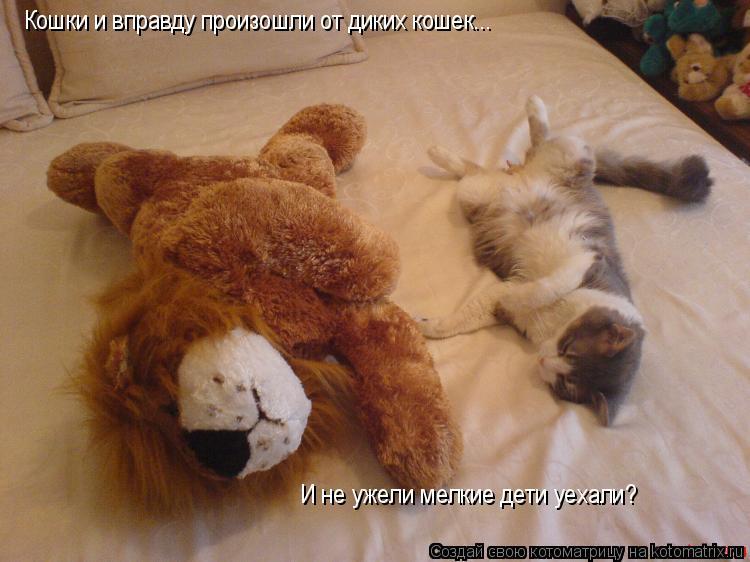 Котоматрица: Кошки и вправду произошли от диких кошек... И не ужели мелкие дети уехали?