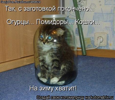 Котоматрица: Так, с заготовкой покончено...  Огурцы... Помидоры... Кошки... На зиму хватит!
