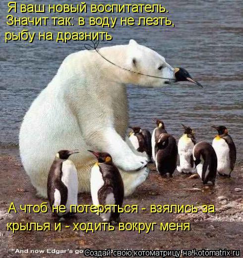 Котоматрица: Я ваш новый воспитатель.  Значит так: в воду не лезть,  рыбу на дразнить А чтоб не потеряться - взялись за крылья и - ходить вокруг меня