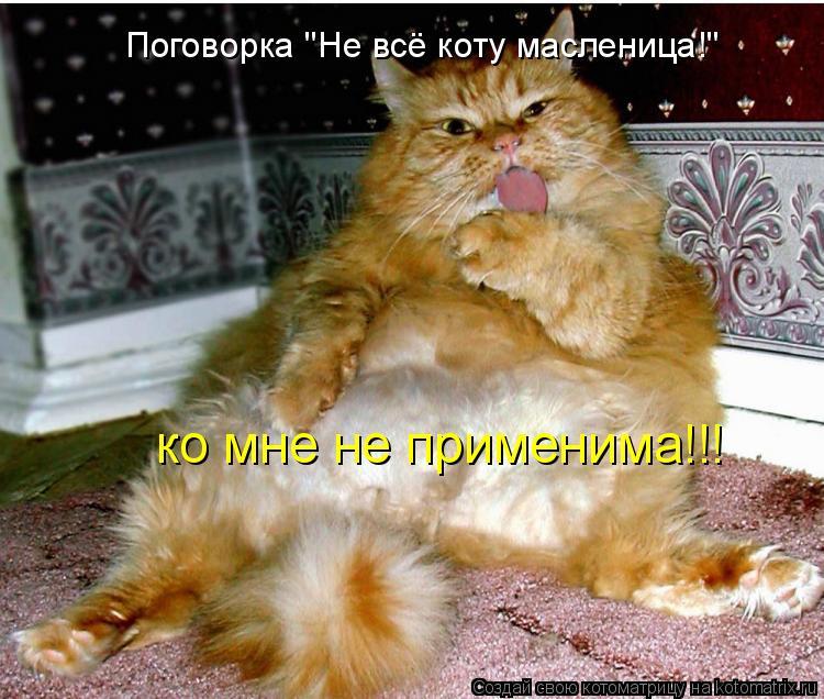 """Котоматрица: Поговорка """"Не всё коту масленица!"""" ко мне не применима!!!"""