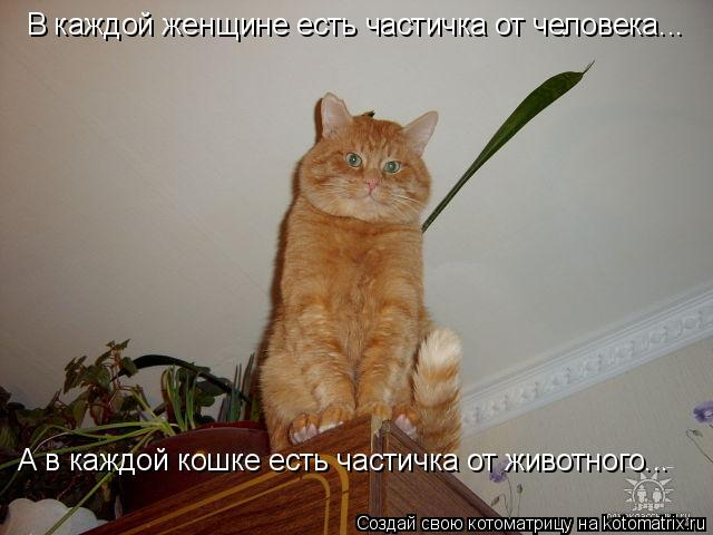 Котоматрица: В каждой женщине есть частичка от человека... А в каждой кошке есть частичка от животного...