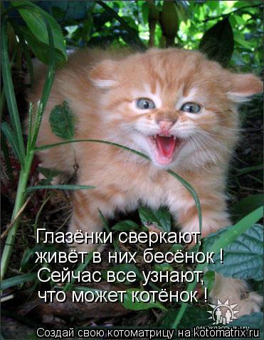 Котоматрица: Глазёнки сверкают, живёт в них бесёнок ! Сейчас все узнают, что может котёнок !