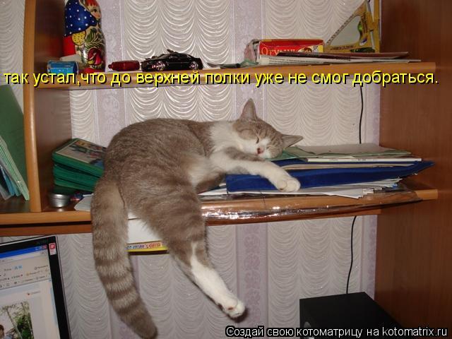 Котоматрица: так устал,что до верхней полки уже не смог добраться.
