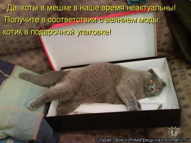 Котоматрица: - Да, коты в мешке в наше время неактуальны! Получите в соответствии с веянием моды: котик в подарочной упаковке!