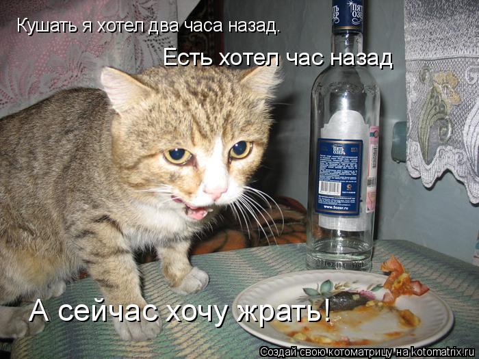 Котоматрица: Кушать я хотел два часа назад. Есть хотел час назад А сейчас хочу жрать!