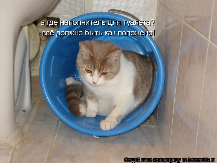 Котоматрица: а где наполнитель для туалета? всё должно быть как положено!