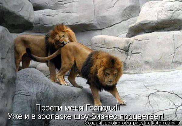 Котоматрица: Уже и в зоопарке шоу-бизнес процветает! Прости меня Господи!!