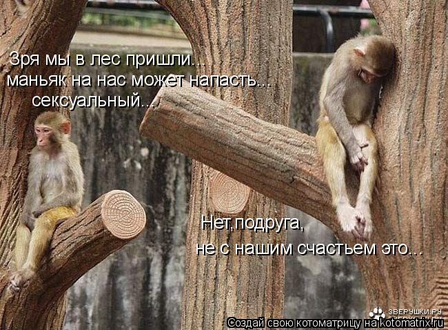 Котоматрица: Зря мы в лес пришли... маньяк на нас может напасть... сексуальный... Нет,подруга, не с нашим счастьем это...