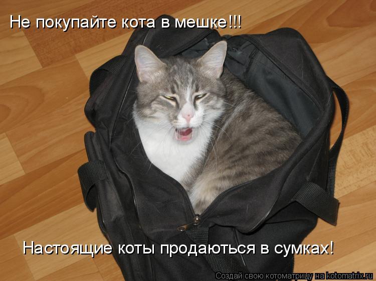 Котоматрица: Не покупайте кота в мешке!!! Настоящие коты продаються в сумках!