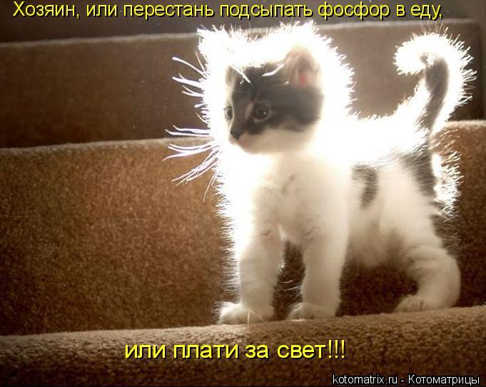 Котоматрица: Хозяин, или перестань подсыпать фосфор в еду, или плати за свет!!!