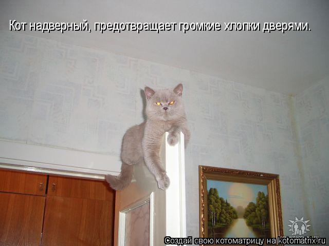 Котоматрица: Кот надверный, предотвращает громкие хлопки дверями.