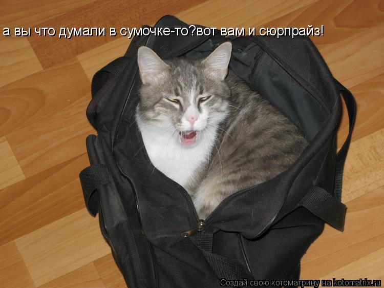 Котоматрица: а вы что думали в сумочке-то?вот вам и сюрпрайз!