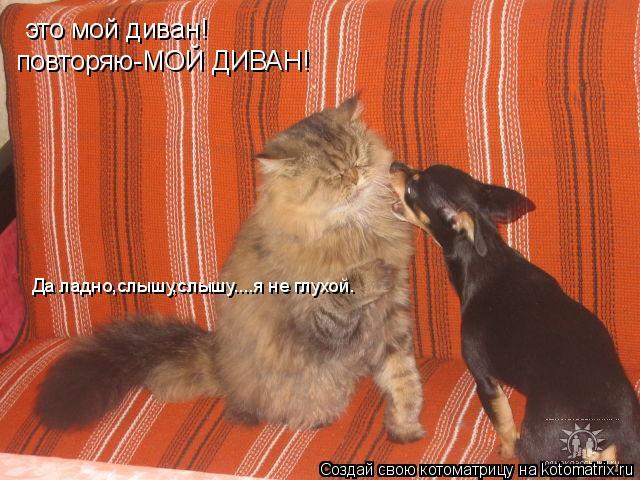 Котоматрица: это мой диван! повторяю-МОЙ ДИВАН! Да ладно,слышу,слышу....я не глухой.