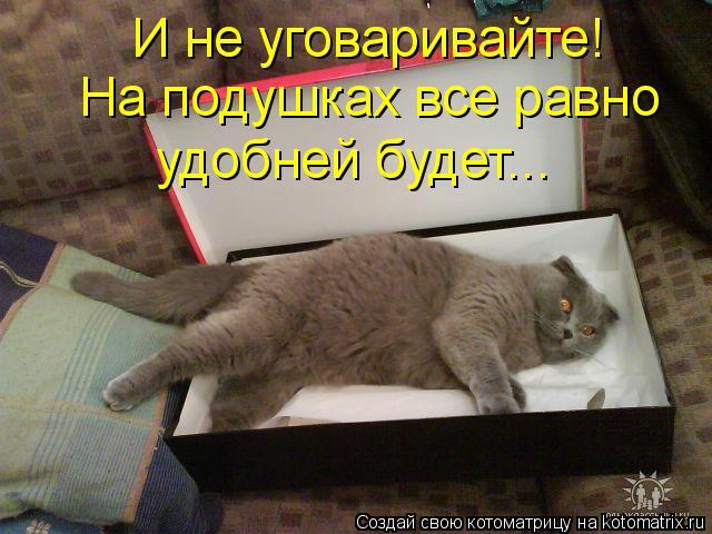 Котоматрица: И не уговаривайте! На подушках все равно  удобней будет...