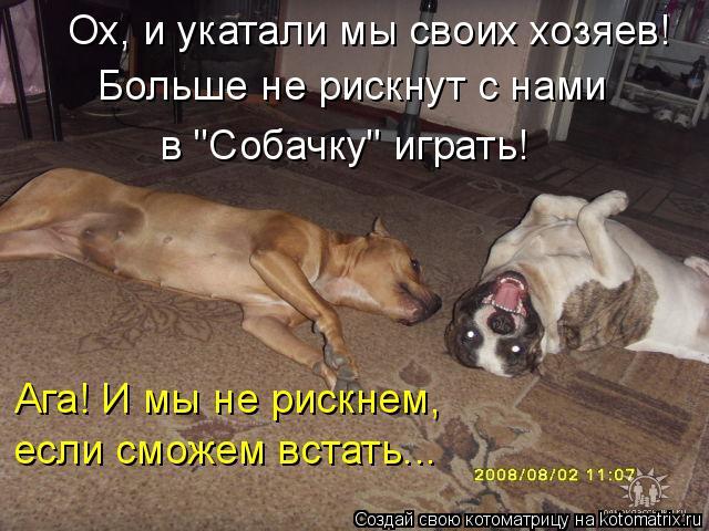 """Котоматрица: Ох, и укатали мы своих хозяев! Больше не рискнут с нами в """"Собачку"""" играть! Ага! И мы не рискнем,  если сможем встать..."""
