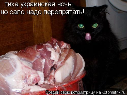 Котоматрица: тиха украинская ночь, но сало надо перепрятать!