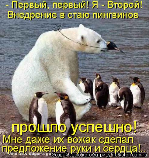 Котоматрица: - Первый, первый! Я - Второй! Внедрение в стаю пингвинов  прошло успешно! Мне даже их вожак сделал предложение руки и сердца!..