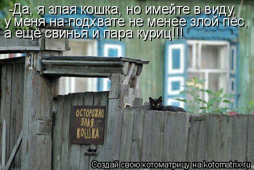 Котоматрица: -Да, я злая кошка, но имейте в виду, у меня на подхвате не менее злой пёс,  а ещё свинья и пара куриц!!!