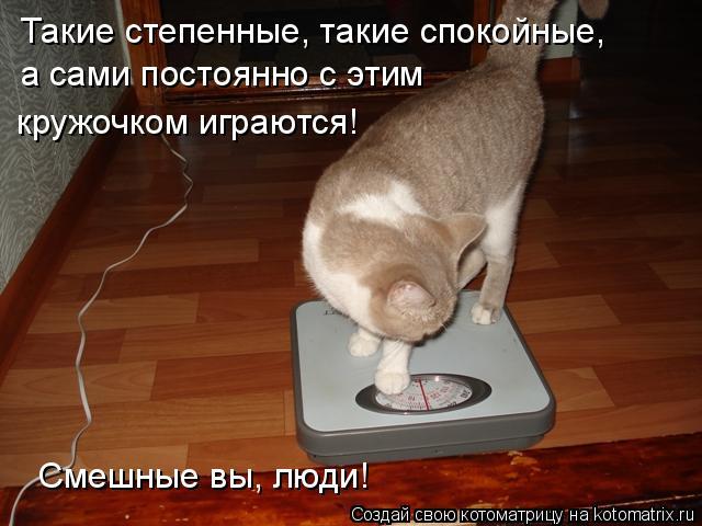 Котоматрица: Такие степенные, такие спокойные, а сами постоянно с этим  Смешные вы, люди! кружочком играются!
