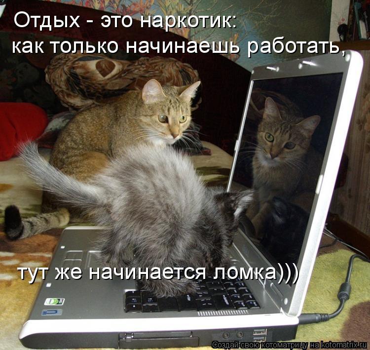 Котоматрица: Отдых - это наркотик: как только начинаешь работать,  тут же начинается ломка)))