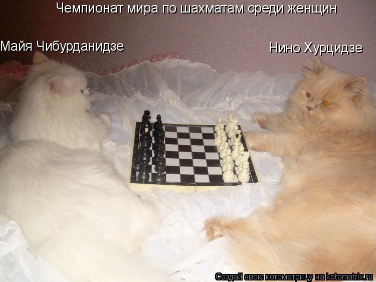 Котоматрица: Чемпионат мира по шахматам среди женщин Майя Чибурданидзе Нино Хурцидзе