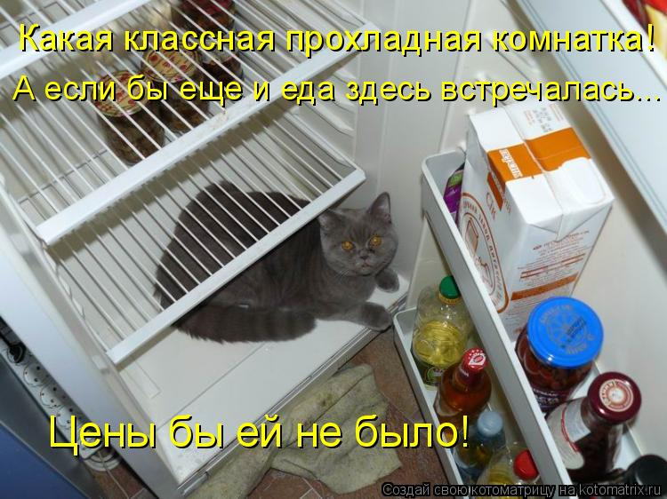 Котоматрица: Какая классная прохладная комнатка! А если бы еще и еда здесь встречалась... Цены бы ей не было!