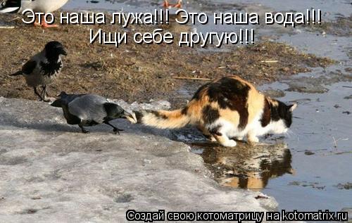 Котоматрица: Это наша лужа!!! Это наша вода!!!  Ищи себе другую!!!